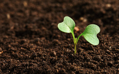 March for Gardeners: It's all about the soil!