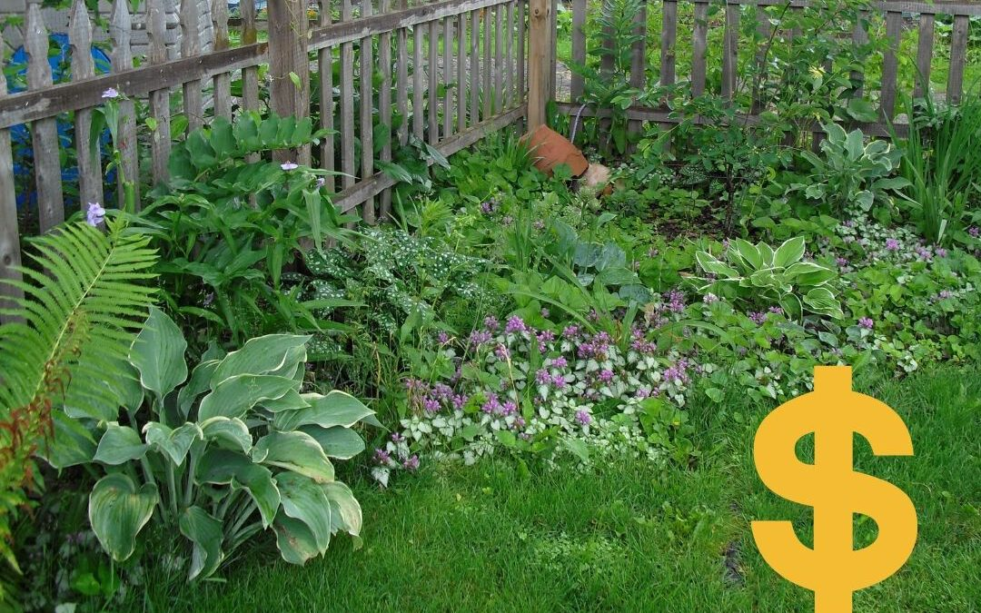5 Steps to Drought-Proof Your Landscape